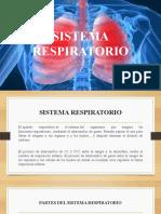 20181102 Sistema respiratorio
