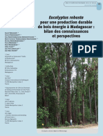 Eucalyptus_robusta_pour_une_production_durable_de_