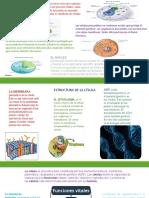 actividad 3 biologia.pptx