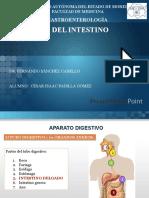 Anatomía y fisiología del intestino delgado.pptx
