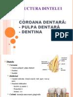 curs 7 pulpa dentara si dentina