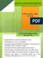 ÎNMULŢIREA-PRIN-BUTAŞI.pdf