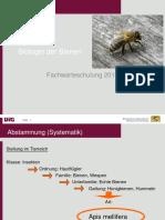 biologie der bienen