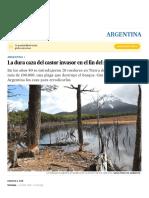 Argentina_ La dura caza del castor inva...el fin del mundo _ Argentina _ EL PAÍS copia