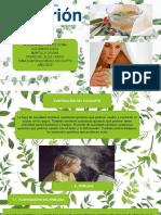 eucalipto original
