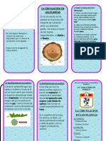 TRIPTICO LA-TRASPIRACION-EN-LAS-PLANTAS.docx