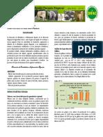 bolefebrero.pdf