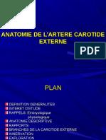 anatomie  artère carotide externe 2