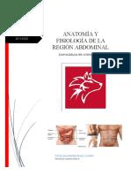 region abdominal del cuerpo humano