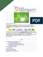 Processo Fotosintético