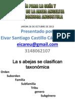 Abejas angelitas - Eivar Castillo