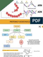 3. PROTEINAS Y A_NUCLEICOS.pdf