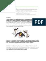 Guía Anatomía comparada.docx
