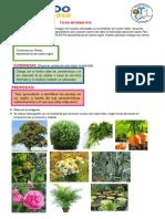 CONOCEMOS LAS PLANTAS DE NUESTRA REGION.docx