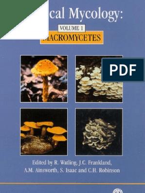 Micología tropical _ Macromycetes | Fungus | Organisms