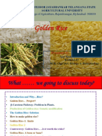 goldenrice-170304171833