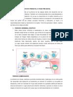 resumen etapa prenatal.docx