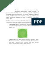 Streptophytas