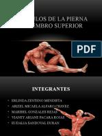diapositivaMÚSCULOS DE LA PIERNA Y MIEMBRO SUPERIOR