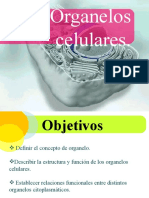 Organelos+Celulares (1).pptx