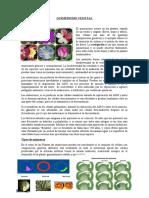Quimerismo-Vegetal.docx