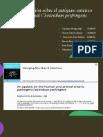 Patogenia del Clostridium perfringes (1)