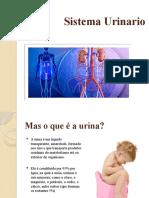 1-Sistema Urinário