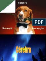 2-Percep.ppt