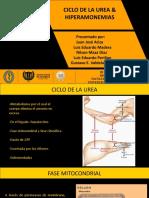 Ciclo de la urea - Hiperamonemias.pptx