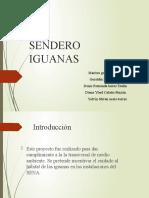 proyecto iguanas