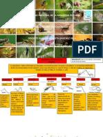 Mapa Conceptual Patas de Insectos