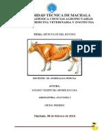 298871296-Musculos-del-bovino.docx