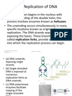 DNA Replication, Protein Synthesis