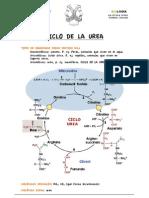 Ficha Destino Grupo Amino c Urea