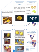 triptico electricidad de limones