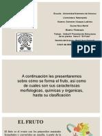 EL FRUTO EQUIPO 6 (1)