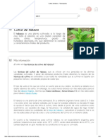 Cultivo de tabaco - Tabacopedia