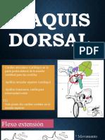 Raquis dorsal