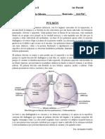 Manual Fisio II (1).docx