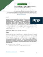 Recuperación Mejorada de Petróleo Asistida por Microorganismos con Capacidad de Sintetizar Biosurfactantes
