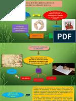 Diapositivas Notarial