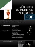 Musculos de MMII