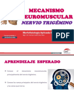 SESION 6- MECANISMO NEUROMUSCULAR