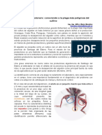 inta_picudo_del_algodonero_conociendo_a_la_plaga_mas_peligrosa_del_cultivo.pdf