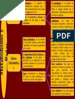 Cuadro Sinoptico Metabolismo y Ruta.pptx