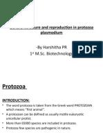 protozoa ppt