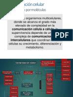 Comunicación celular 2020 -1.pdf