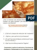 Módulo 3. Citoplasma, citoesquelo y organelas fibrilares