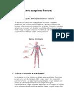 Sistema sanguineo humano.docx