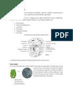 ORGANELOS CELULARES Y RESPIRACION CELULAR.pdf